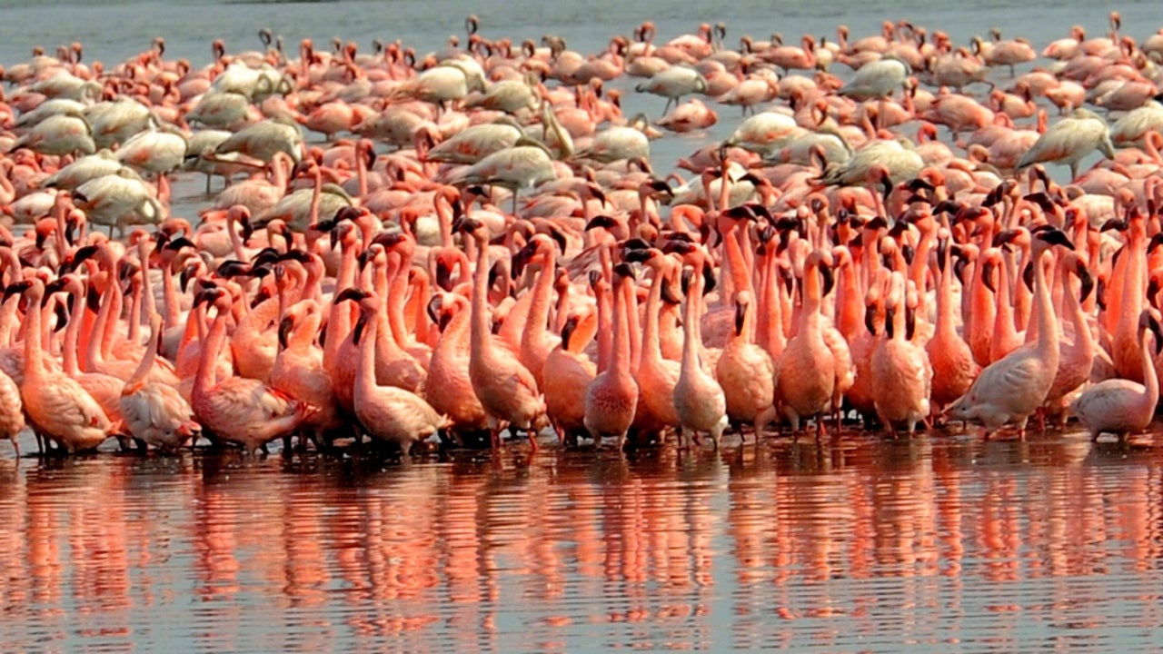 The Mumbai Ropeway Project Will Pass Over The Sewri Mudflts, Home To The Flamingoes Who Make The City Their Home Every Year.