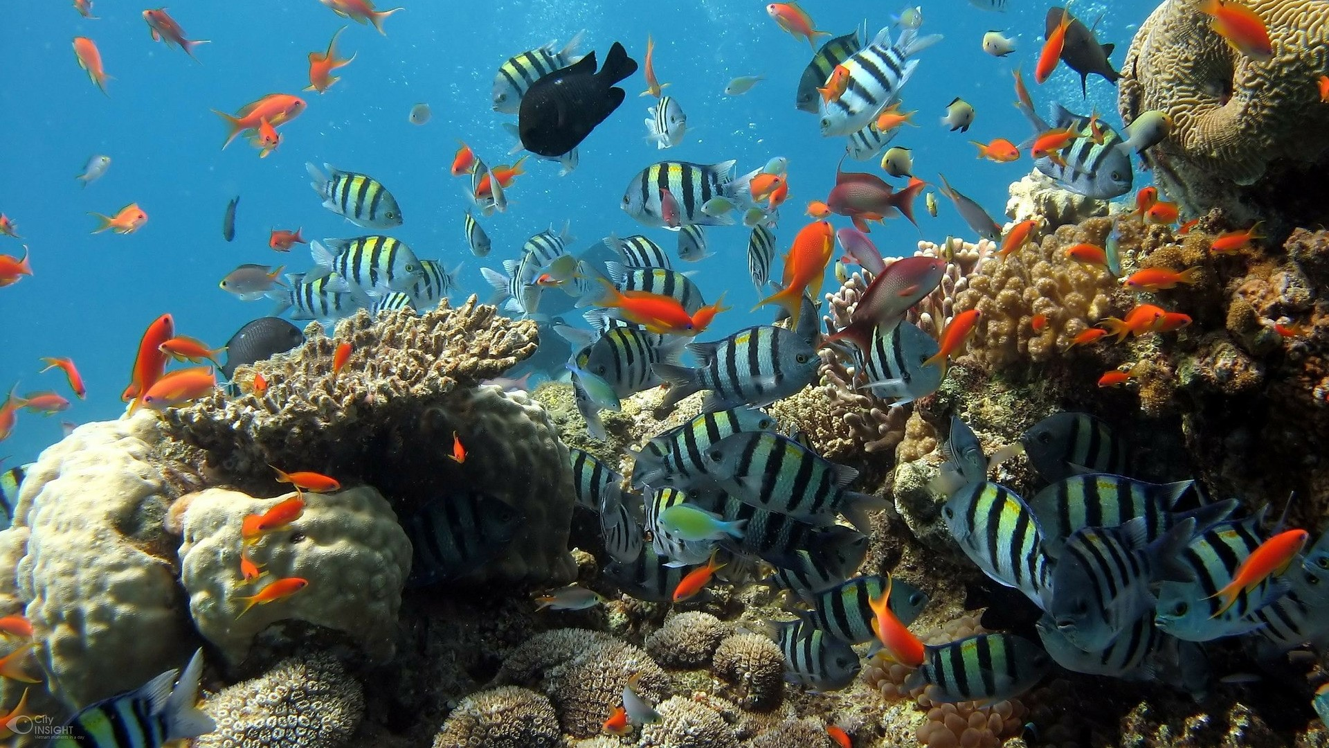 The National Park Of Aqaba In Red Sea Is Situated Perfectly So You Can Explore The Reef Life.